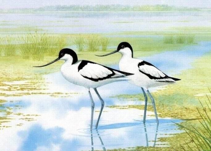 经典手绘,唯美效果,视觉震撼的 鸟之图谱