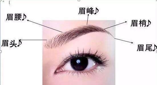 图解:7种眉型和脸型的专业搭配,化妆小白终身受益!图片