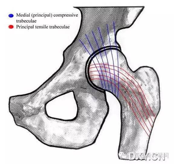 股骨颈骨折 Garden 分型 这些年你可能一直理解错了图片