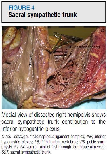 肥胖女尸体_女性尸体中盆腔自主神经的解剖