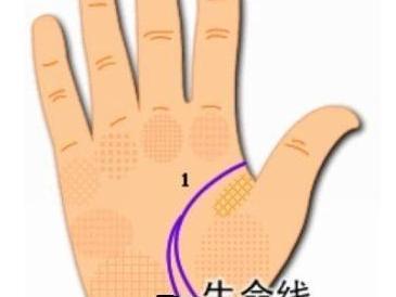 学会这几招,看手相真的很简单,自己都会看