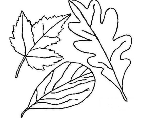 秋天的树叶简笔画怎么画 树叶简笔画 亲子简笔画大全