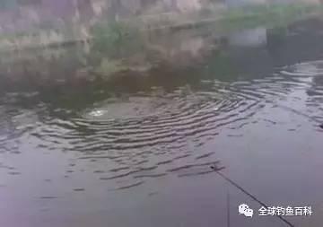 夏季雨后钓鱼如何选择钓点