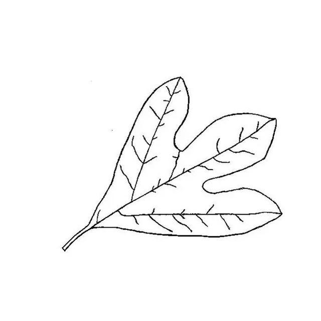 树叶简笔画 树叶简笔画图片 秋天的树叶简笔画 树叶的简笔画画法 树叶