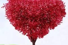 婚礼和前任接吻,十二星座到底爱的是新欢还是旧爱?