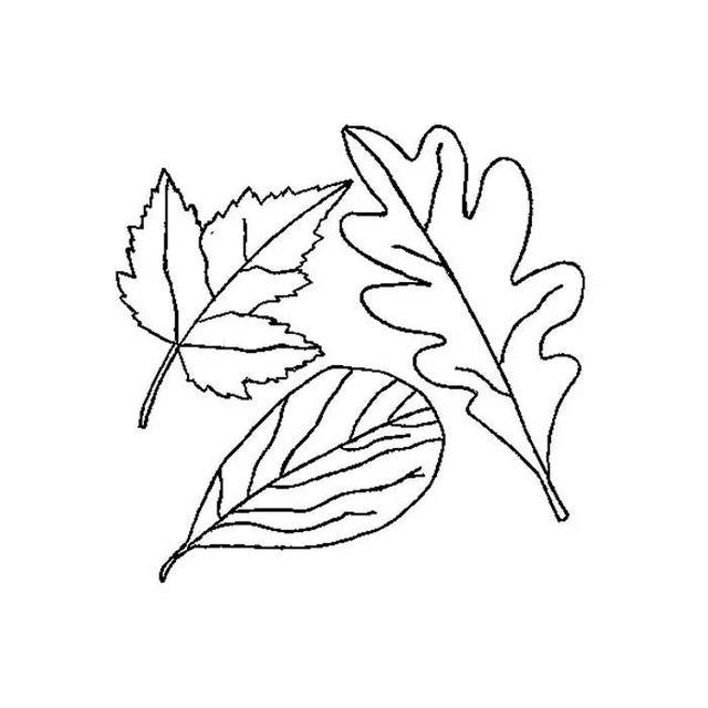 儿童简笔画 画树叶,和孩子来一场大自然的感悟吧