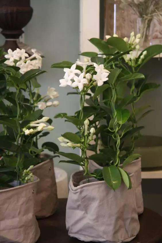 夏天邵阳人家里养这些植物,不仅好看,还能帮忙驱蚊!