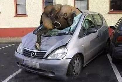这些奇葩的车祸,估计你这辈子都没见过!