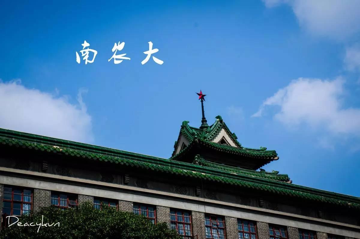 一条路线串联南京各大高校,带你深入了解各大高校独特的美图片