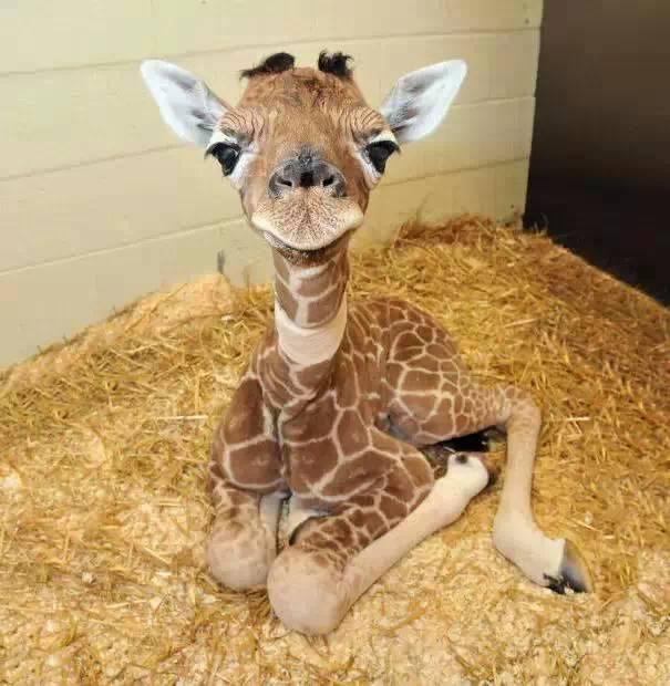 刚出生的动物,竟然是这样子的