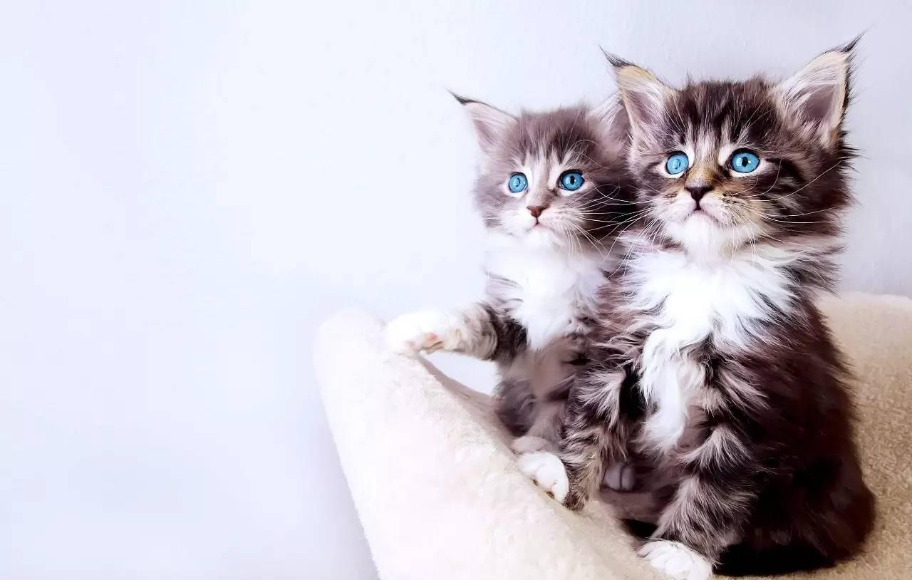 我是你可爱小猫韩志昱