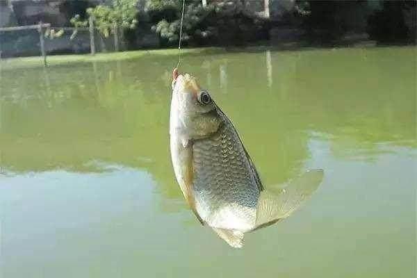 夏天钓鱼掌握了这些,你的渔获最起码翻三倍!