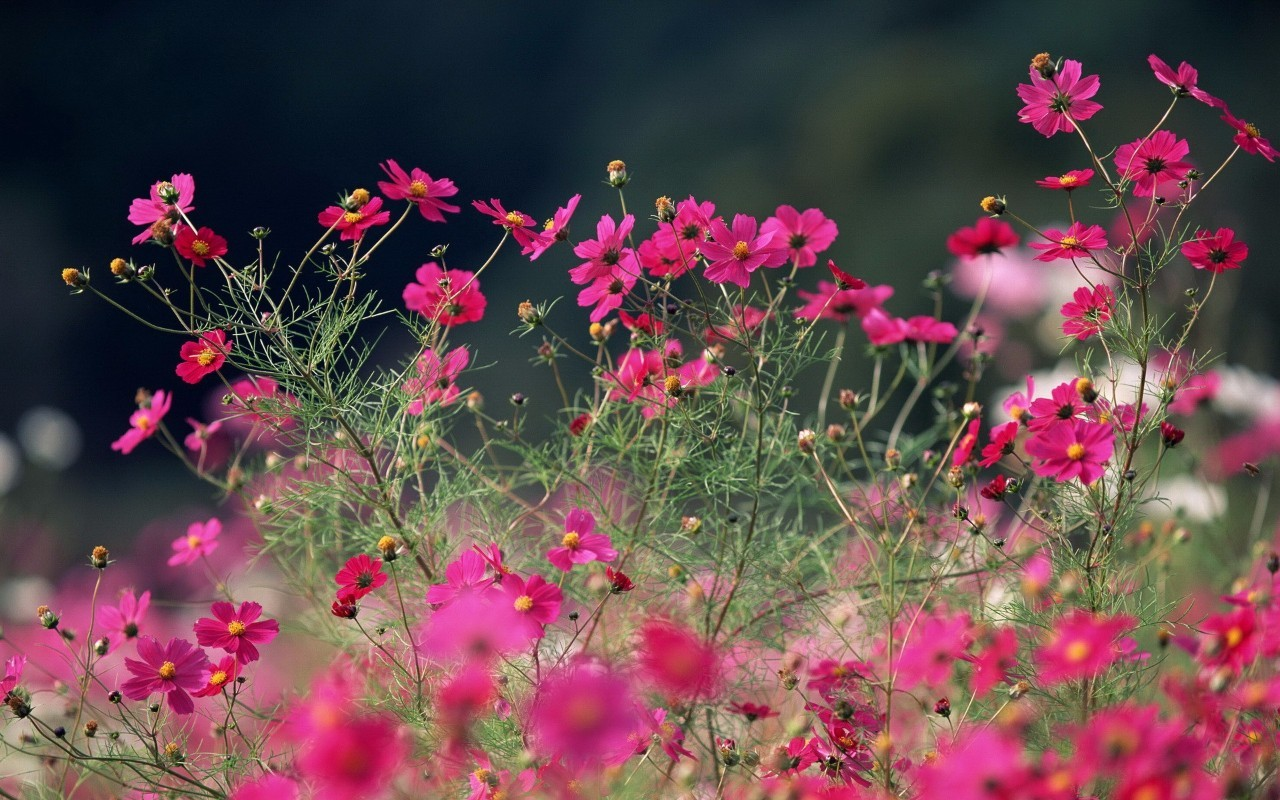 蓝漠的花超清图片