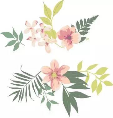 Image result for 石斛 本草纲目