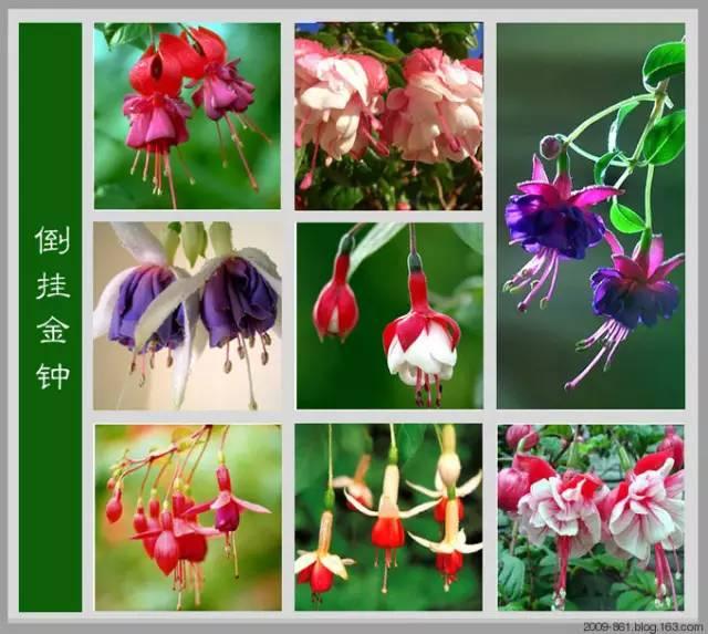 史上最全春图册-世界上最齐全的各种花 从此认花不求人 , 太珍贵了