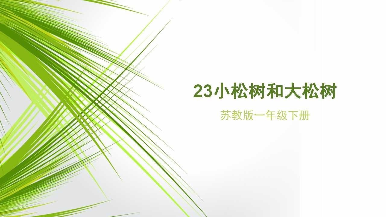 册苏教版23 小松树和大松树 讲解