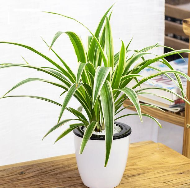 净化空气的室内植物排名
