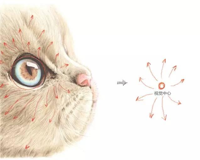 教程| 彩铅猫的手绘步骤详解