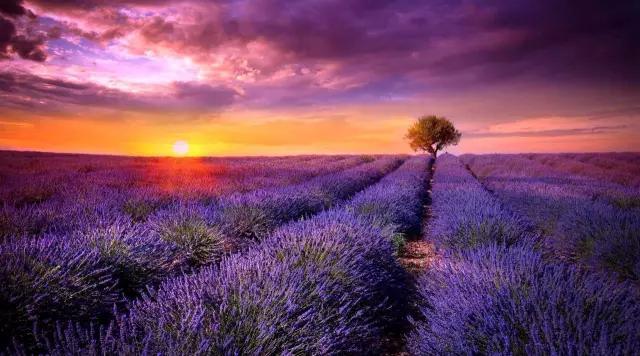 成都即将被7片薰衣草花海包围,端午遇见紫色天堂图片