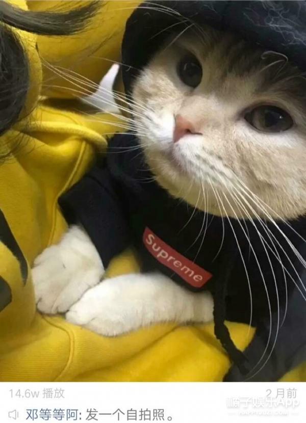 www撸逼网_撞脸angelababy,酷爱卖萌撸猫,被叫\