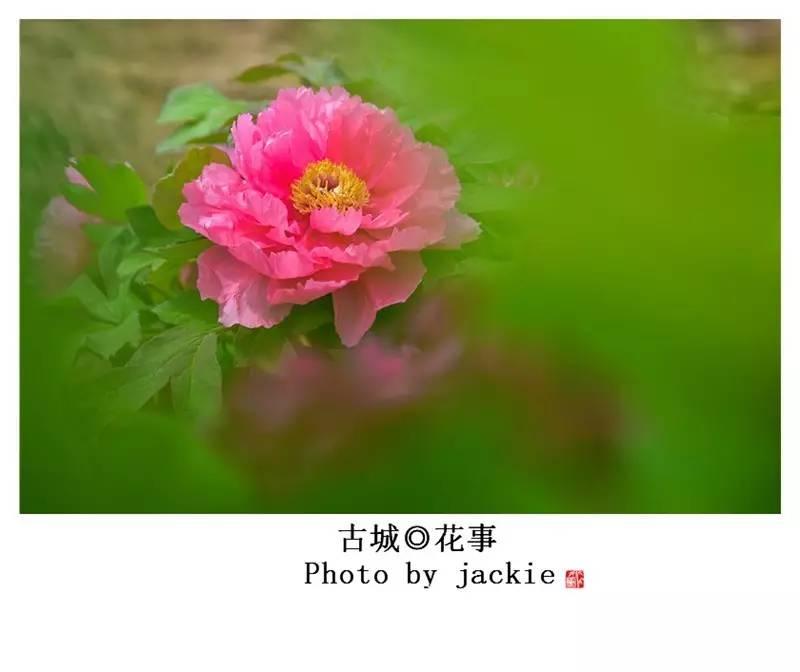 现代汉�z(�X[_深圳四年,遍访鹏城山水,自然风光,领略现代都市风情,拍摄了许多相关