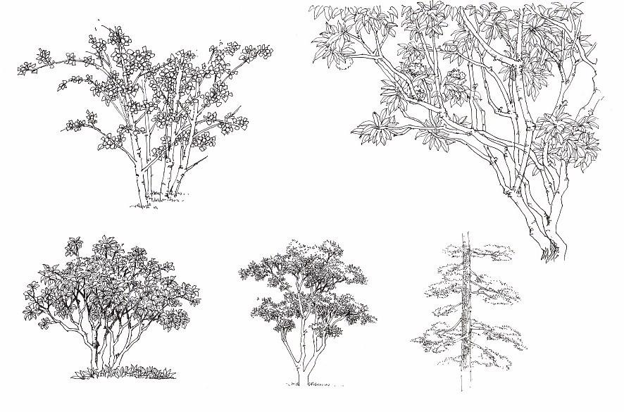 手绘  如何画好景观植物?