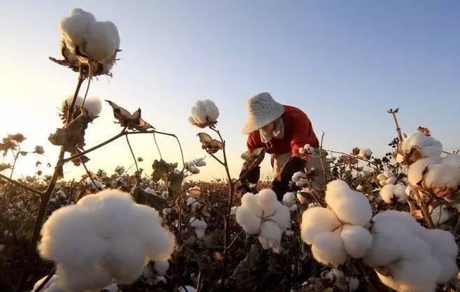 他们成为了农业领域创业的重要力量 学思