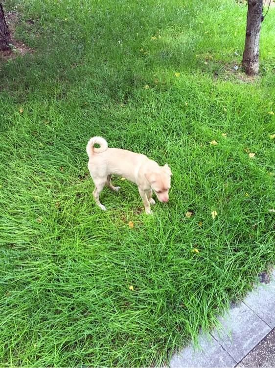 周末去公园玩,碰到充满灵动的狗狗,成了我的伙伴