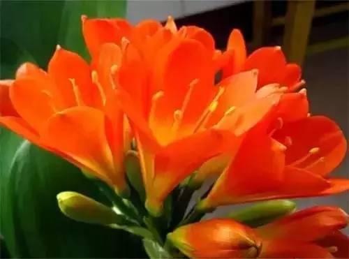 家里养这些花 让全家更长寿