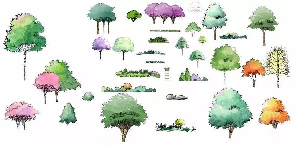 手绘| 如何画好景观植物?