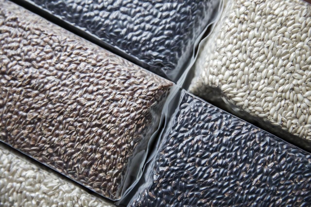 拯救中国激增的糖尿病患者数,新品种的水稻可能有助于预防糖尿病?|商周特写
