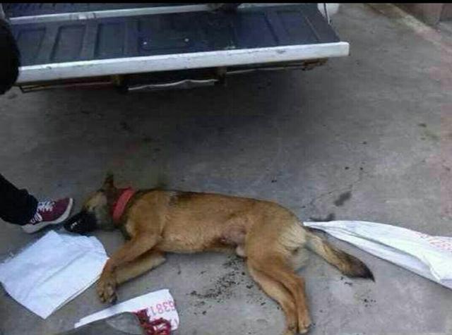 狗被毒死什么样子