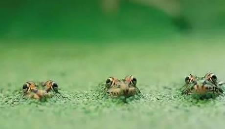 假,听听田里的青蛙怎么说