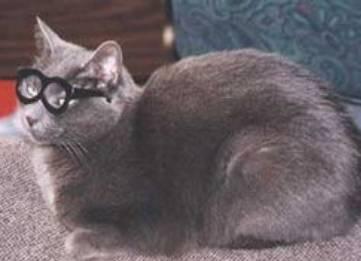 一个近视猫的自白——没有泪流满面,伤心凉粉也将就
