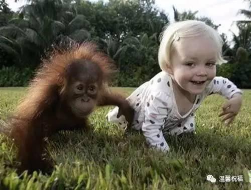 """艾米莉和小猩猩""""里什""""初识"""