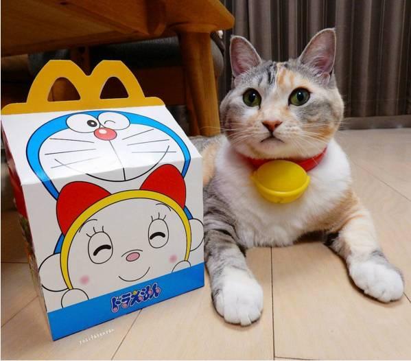 """日本猫奴疯了!喵星人戴上""""哆啦A梦铃铛""""""""一秒变身小叮当!"""