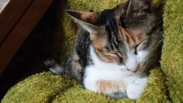 网友家的猫在客厅睡觉,家里的狗狗看到后,怕猫咪着凉,竟...