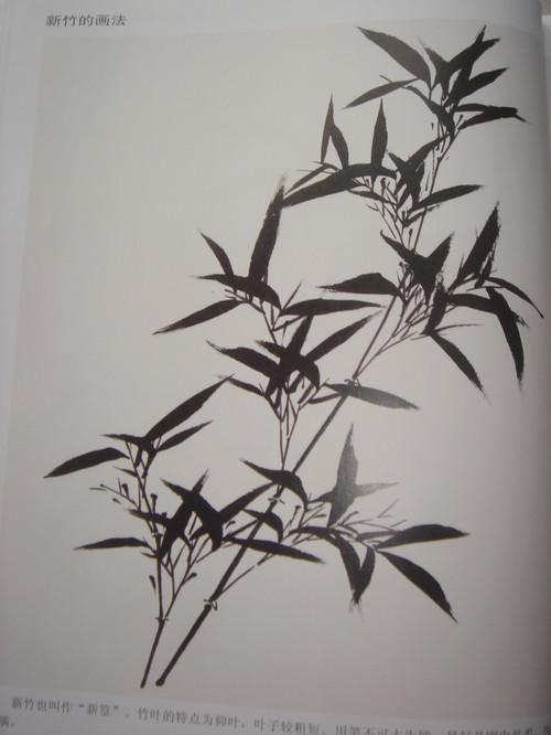 落笔需要干净利索,让竹叶之间的关系明确.图片