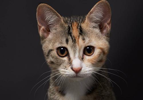 猫拉肚子但是精神很好,猫拉稀但是精神很好