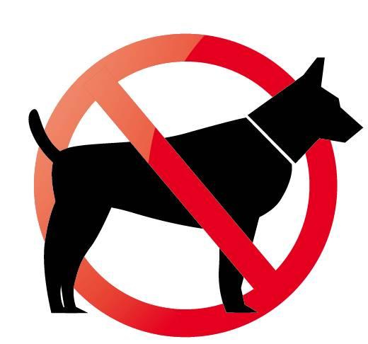 苏州的狗狗要持证上岗了!lisrel手把手图片