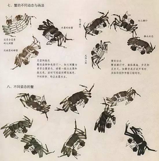 法 几种虫鸟的画法,值的收藏