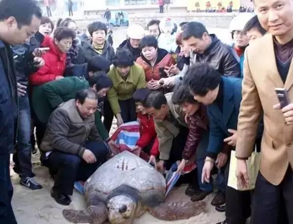 真人真事:十六年前他放生海龟,重遇之后他居然被…