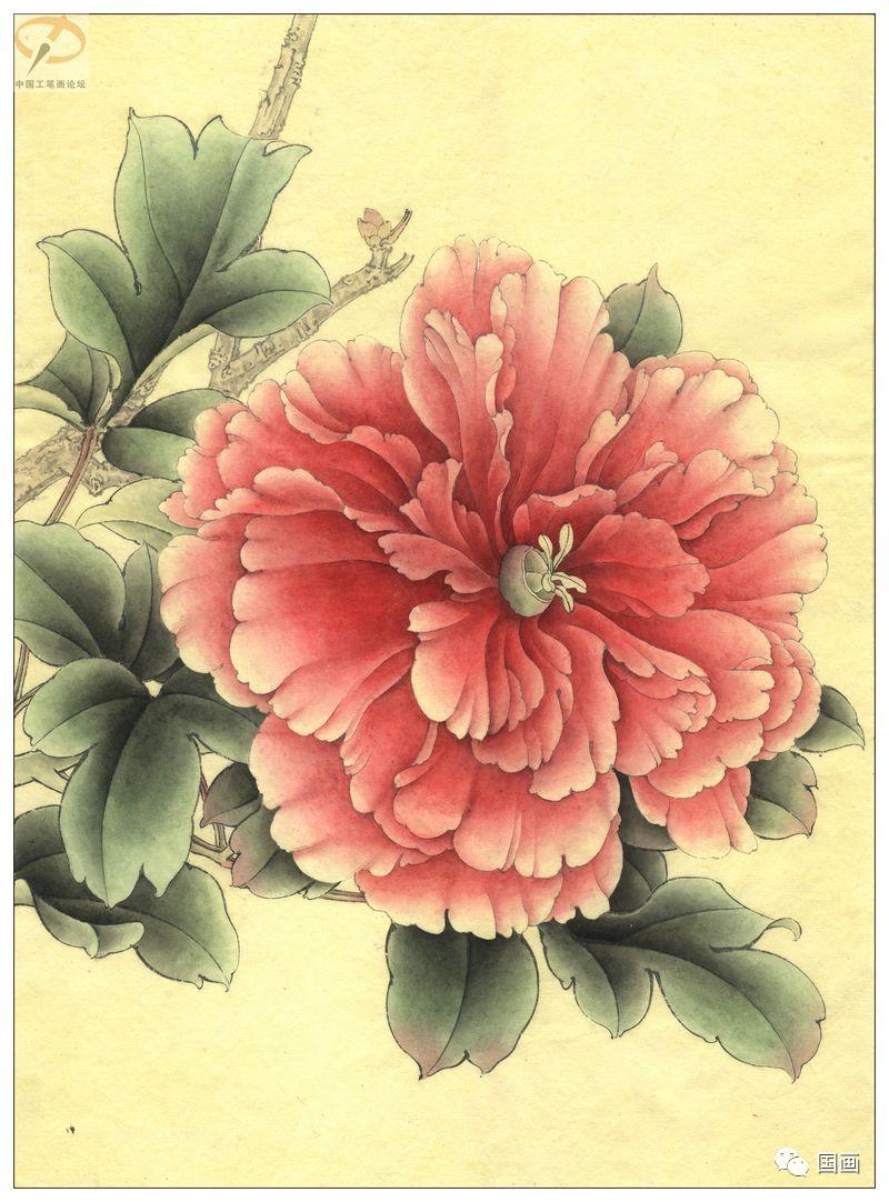李晓明工笔画三色牡丹叶子 标清