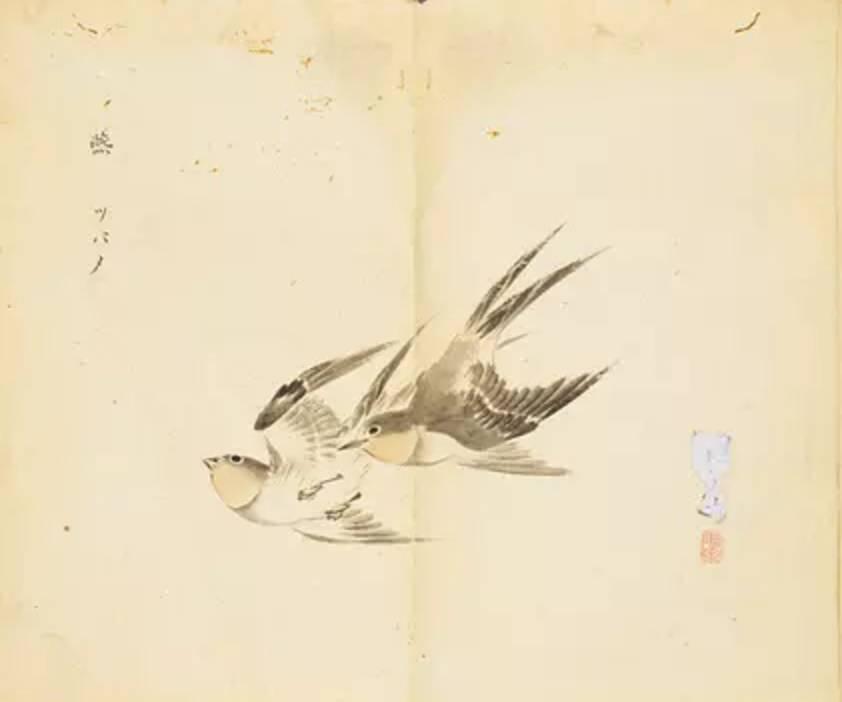 燕燕于飞,差池其羽.(燕燕)