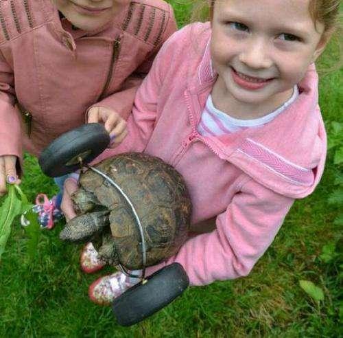 乌龟冬眠时被老鼠咬掉两前腿, 最后乌龟装上这东西