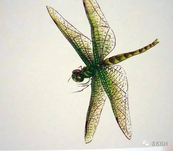 工笔画蜻蜓,就这么简单