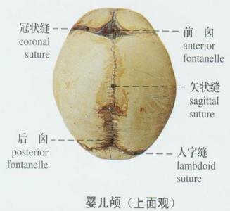 颅骨有几块图片1