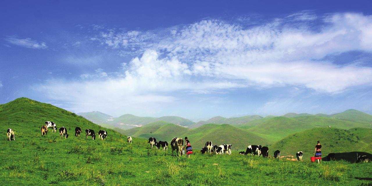 牧场_有一种草原风光叫南山牧场
