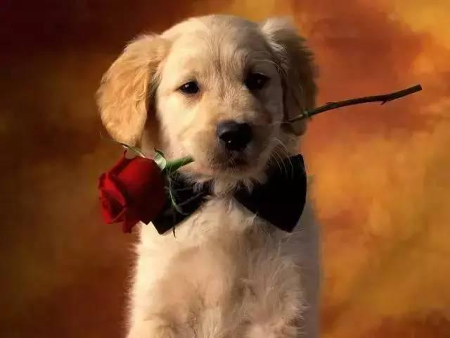 """你会允许对象随意欺负你的狗吗?这14种表现,爱狗人身"""""""