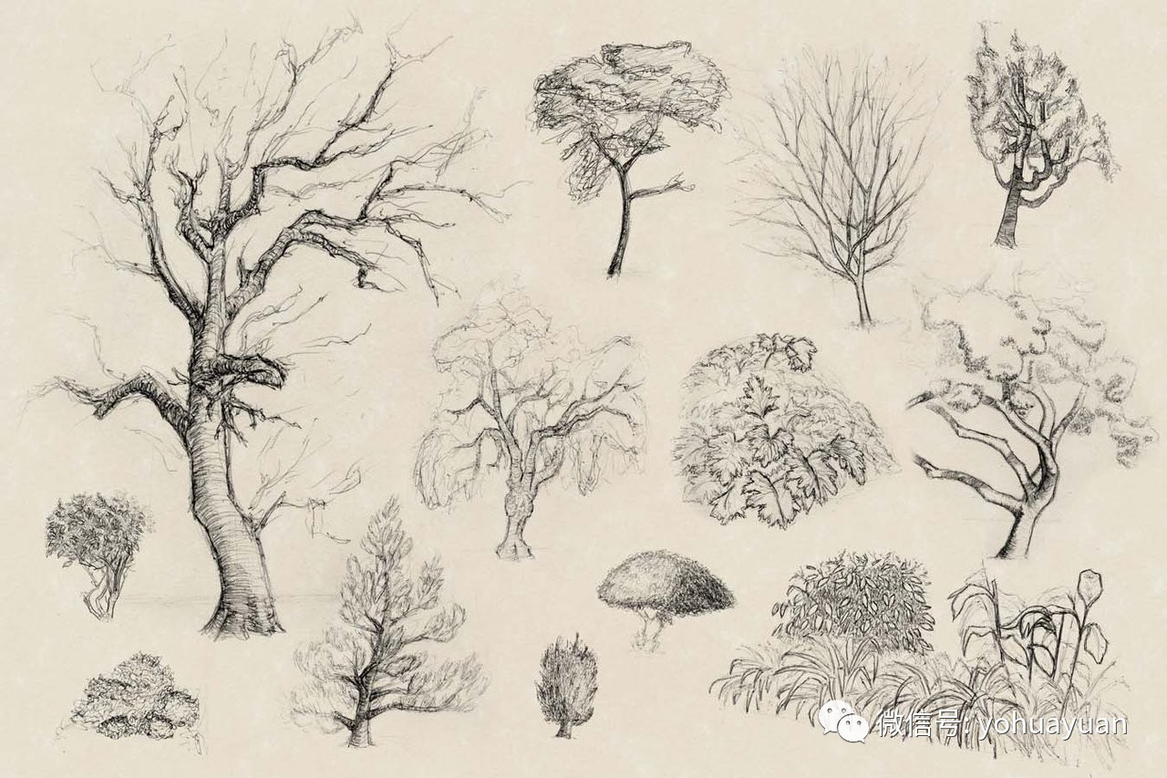 专项攻克速写 树木